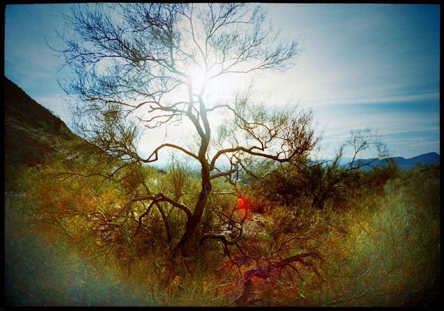 treeflare