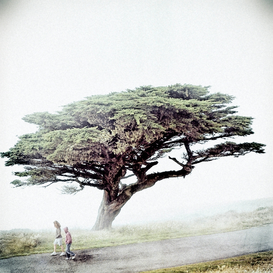 Children walking through Pacific Fog, windswept tree at Point Reyes